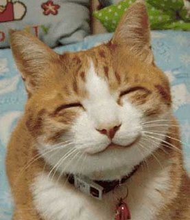 kucing-smile